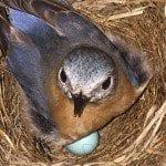 Grants in Action Bluebirds